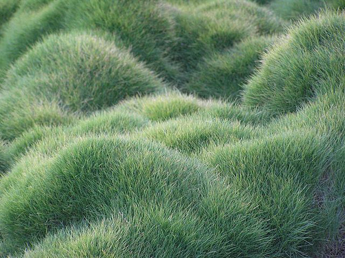 Japanese grass landscaping and lawn care haif for Designing with grasses