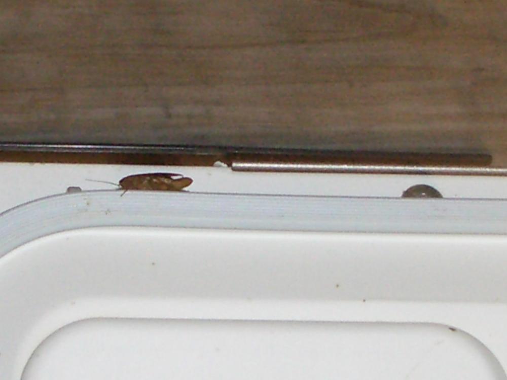 German roach residue in dishwasher 2.JPG