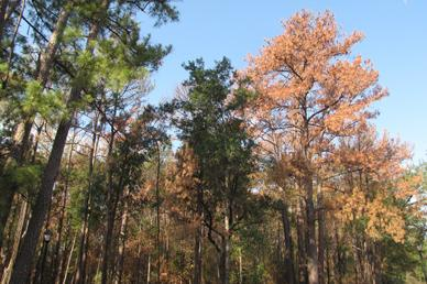 Dying-Trees-memorial-park1.jpg