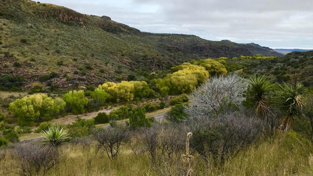 Limpia Canyon cottonwoods.jpg